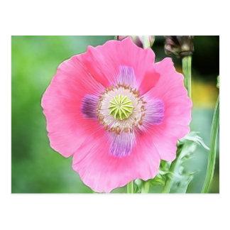 Poppy Bloom - Papaver Somniferum Postcard