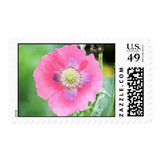 Poppy Bloom - Papaver Somniferum Stamp
