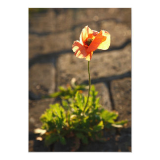 Poppy blooming card