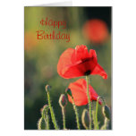 Poppy Card 1 Greeting Cards