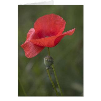Poppy. Card by cARTerART