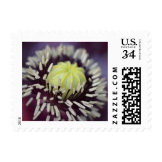 Poppy Center Stamp