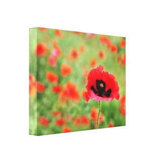 Poppy Close Up in field of Poppies Canvas Print
