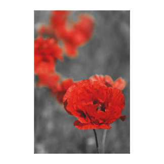 Poppy Comet Canvas Print