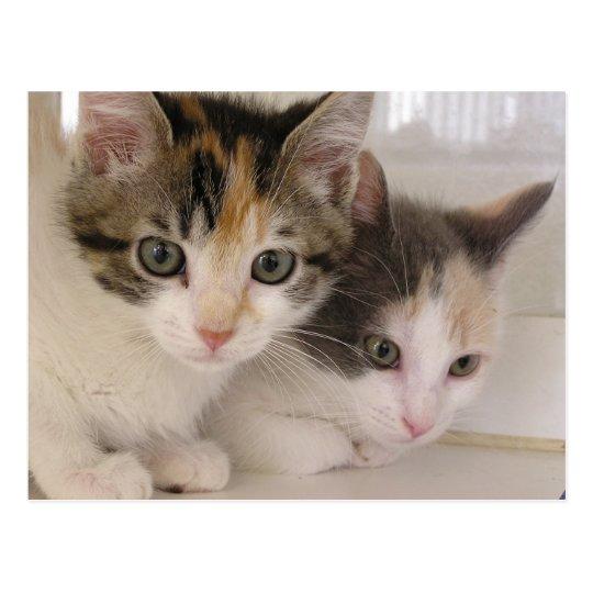 Poppy & Daisy Postcard