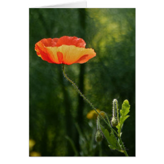 Poppy Dreams Card