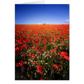 poppy field 2 card