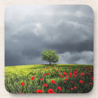 Poppy Field and Cloudy Sky Coaster