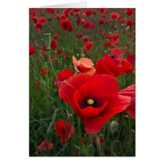 Poppy Field Card
