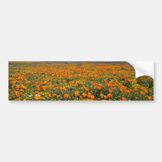 Poppy field  flowers bumper sticker