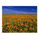 Poppy field  flowers postcard