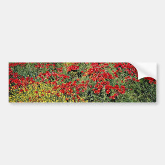 Poppy field, Middle Atlas, Morocco  flowers Bumper Sticker