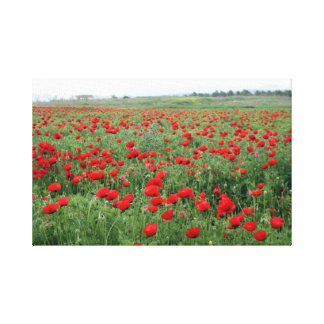 Poppy field nature landscape red flowers canvas print