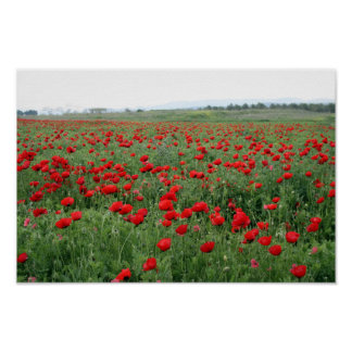 Poppy field nature landscape red flowers poster