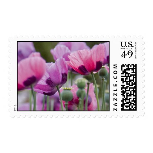 Poppy Field Postage Stamp