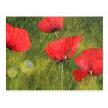 Poppy field postcard