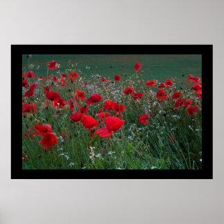 Poppy Field. Poster by cARTerART