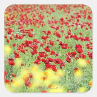 Poppy Field, Siena, Italy Square Sticker