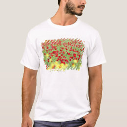 Poppy Field, Siena, Italy T-Shirt