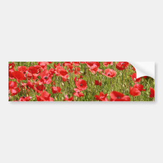 Poppy field - Stunning! Car Bumper Sticker