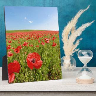 Poppy field - Stunning! Plaques