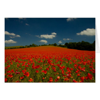 Poppy Field under a Summer Sky Card