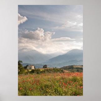 Poppy fields in Italy Poster