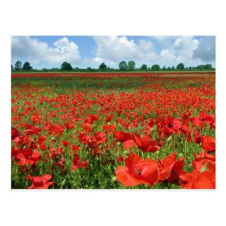 Poppy Fields Postcard