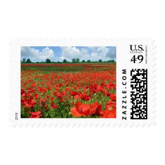 Poppy Fields Stamp