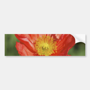 Meaning of flowers bumper stickers car stickers zazzle poppy flower and meaning bumper sticker mightylinksfo