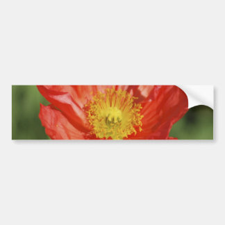 Poppy flower and meaning bumper sticker