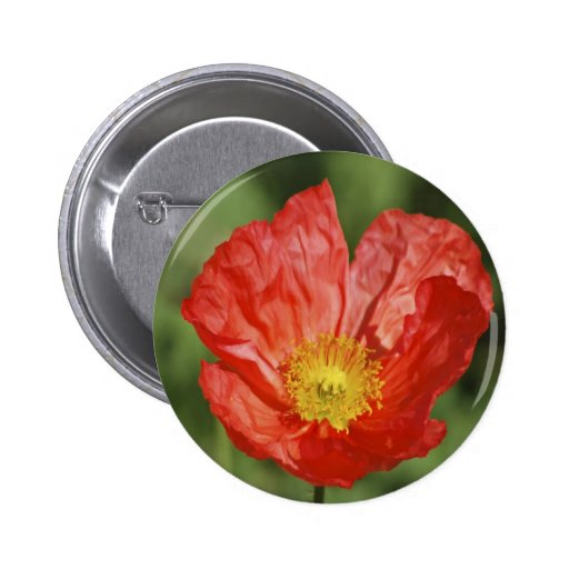 Poppy flower and meaning button