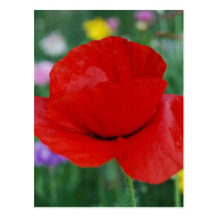 Remembrance day poppy postcards zazzle poppy flower and meaning postcard mightylinksfo