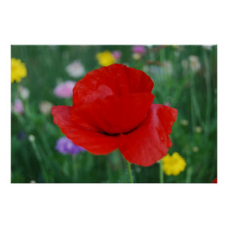 Meaning of flowers posters zazzle - Yellow poppy flower meaning ...