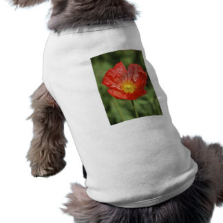 Poppy flower and meaning tee