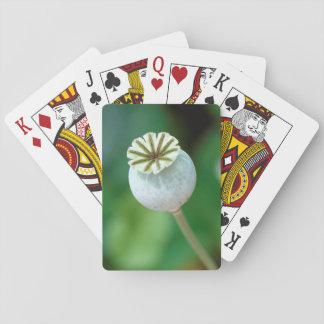 Poppy Flower Head Seed, Western Cape Card Decks