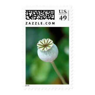 Poppy Flower Head Seed, Western Cape Postage