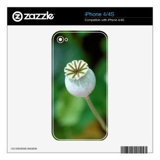 Poppy Flower Head Seed, Western Cape iPhone 4S Skins