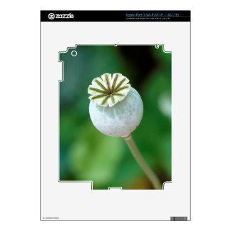 Poppy Flower Head Seed, Western Cape iPad 3 Decal