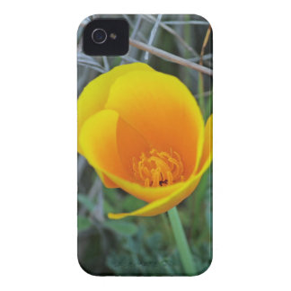 Poppy Flower, iphone 4 Case-Mate Barely There Case-Mate iPhone 4 Case