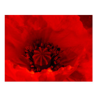 Poppy flower postcard