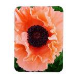 Poppy Flower Premium Magnet Magnet