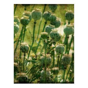 Poppy flower seed pod gifts on zazzle poppy flower seed pods postcard mightylinksfo