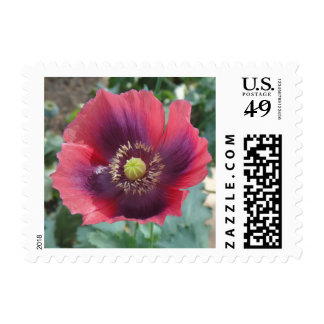 Poppy Flower Stamp