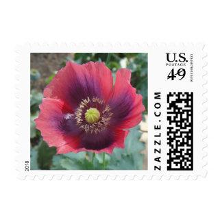 Poppy Flower Stamp