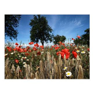 Poppy flowers in the corn field postcard