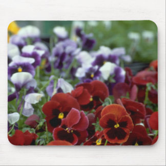 Poppy Flowers On The Ground Mouse Pad