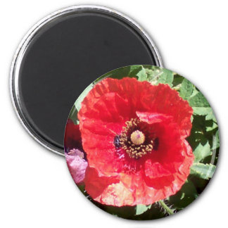 Poppy flowers pedals macro photography art prints 2 inch round magnet