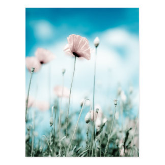 Poppy Flowers Post Cards