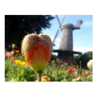 Poppy Heart Postcard